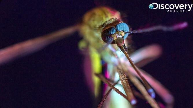 Komar, nasz śmiertelny wróg