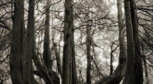 Najstarsze drzewa świata w obiektywie kalifornijskiej artystki Beth Moon