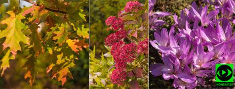 Za oknami depresyjnie, ale jesień ma też barwne oblicze