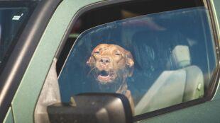 Upał, a w zamkniętym samochodzie dziecko lub zwierzę. Jak reagować